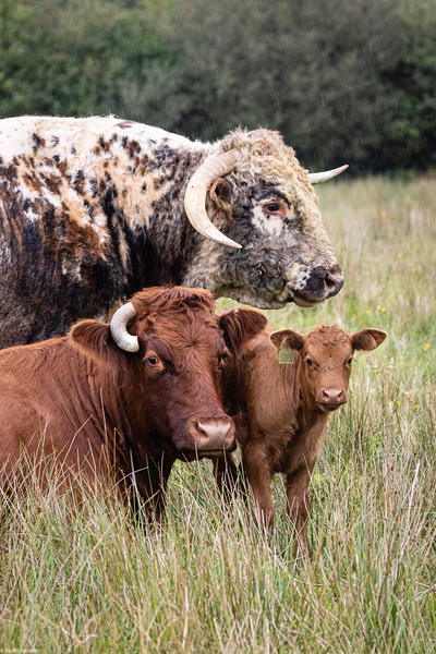 The Longhorn Family Group