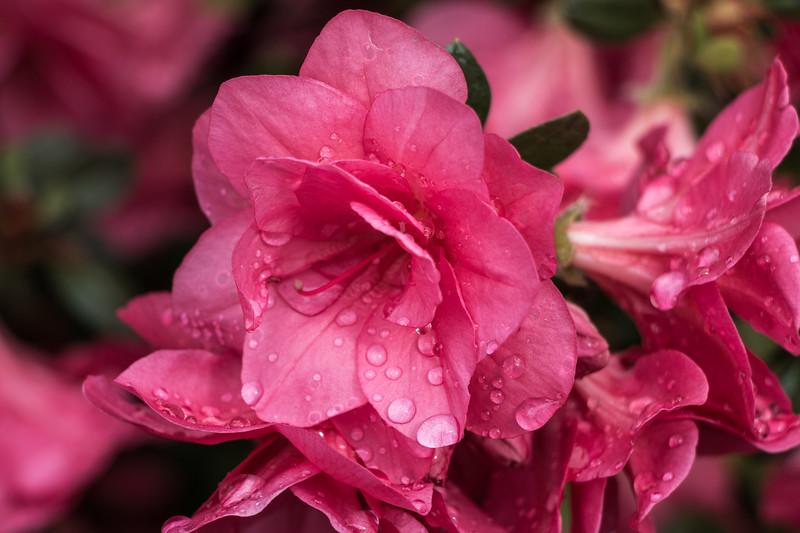 160501_50_6321_Flowers-1.jpg