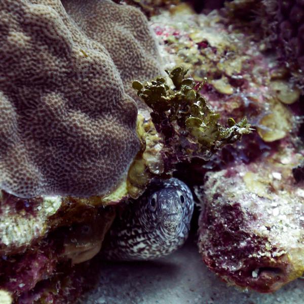 Fish hiding among corals, Belize