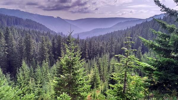 Three Lynx Way Trail Exploration