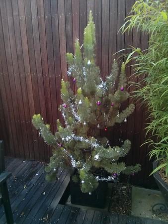 20141208 Christmas in the garden
