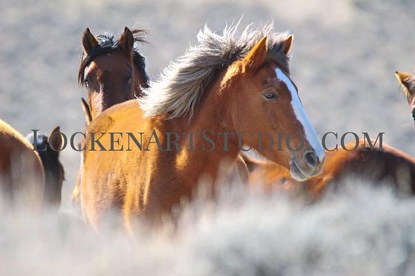 Fish Springs Mustangs Feb 2020
