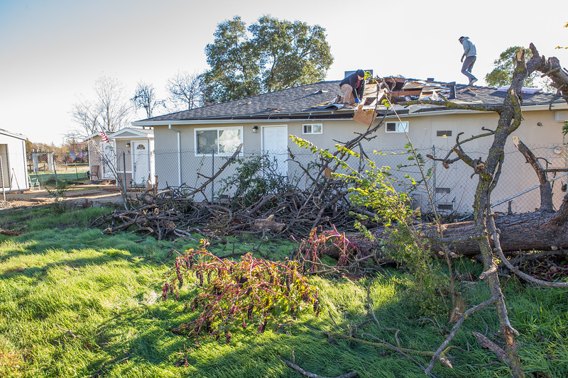 5671 Wallace Ave - Tree 1030am 12 16 2017 Extremly Windy Conditions-117.jpg