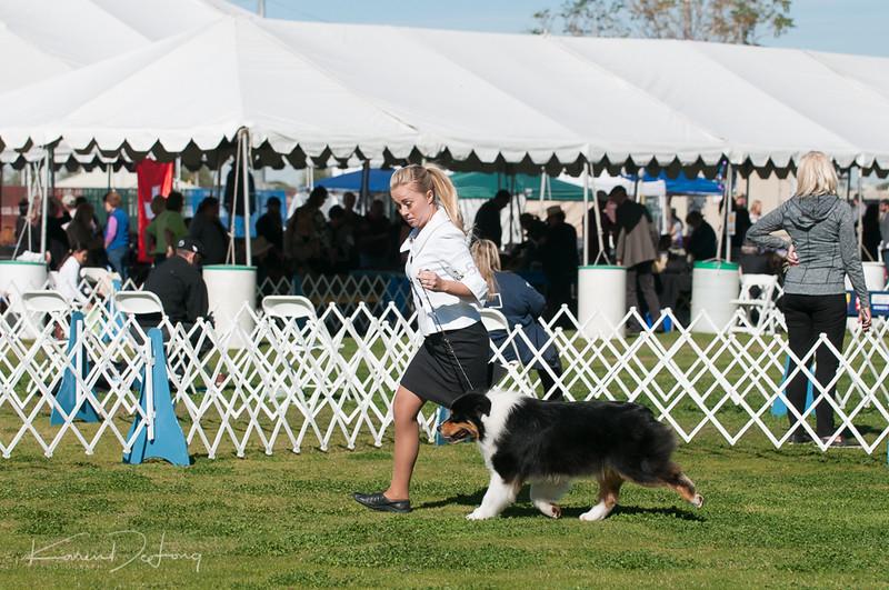 20170205_Australian Shepherds_Lost Dutchman Kennel Club-22.jpg