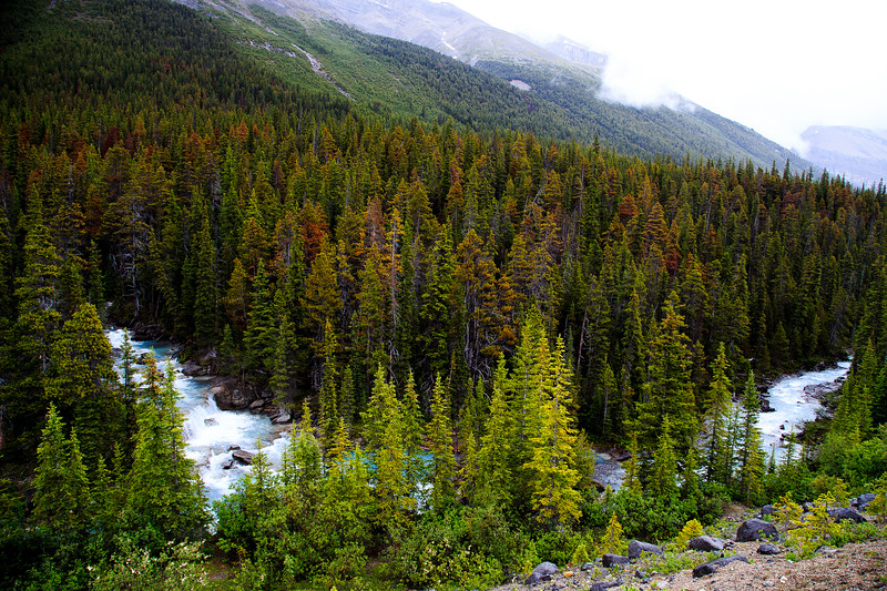 Banff, Alberta Canada 2019-2370.jpg