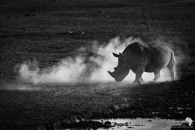 Dust of a Rhino