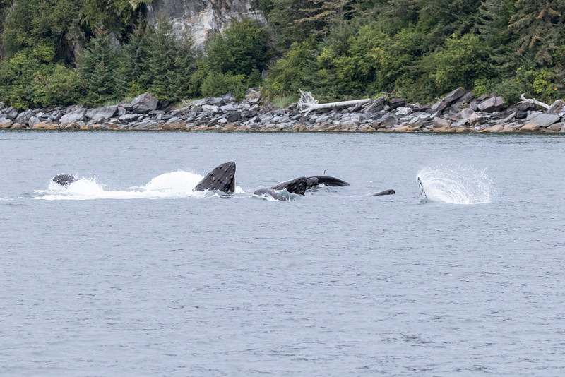 Alaska 2015 - Juneau -  072615-077.jpg