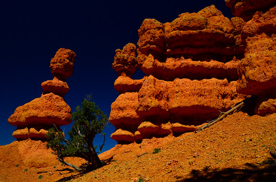 Red Canyon in Dixie National Forest, Utah