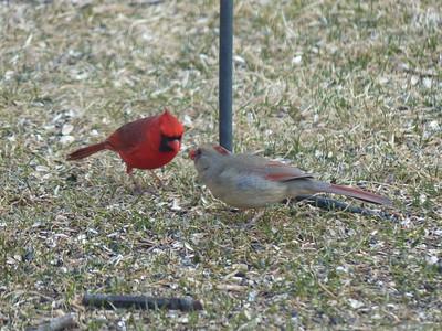 20130407 Cardinal Kiss