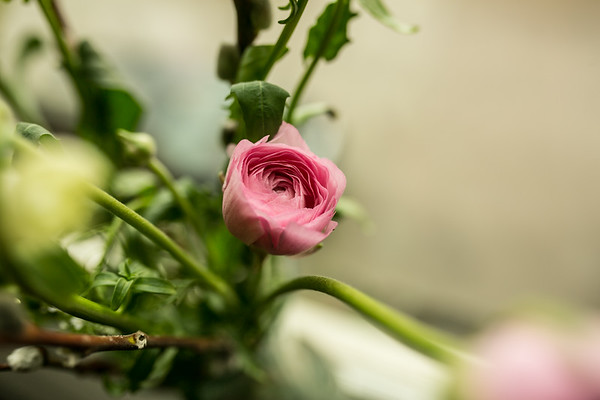 Clara Joyce Flowers