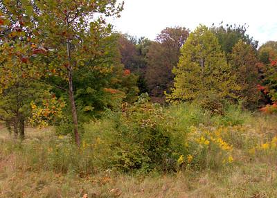 Autumn At Taylorsville Metropark & Miami County
