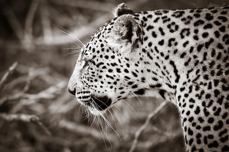 LeopardHills-20191029-1635.jpg