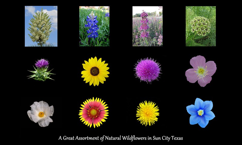 20-Wildflower PICS Sun City.jpg