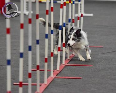 St. Paul Dog Training Club