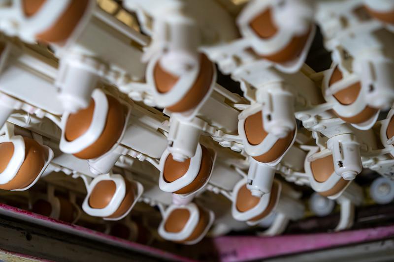 Eggs 56.jpg