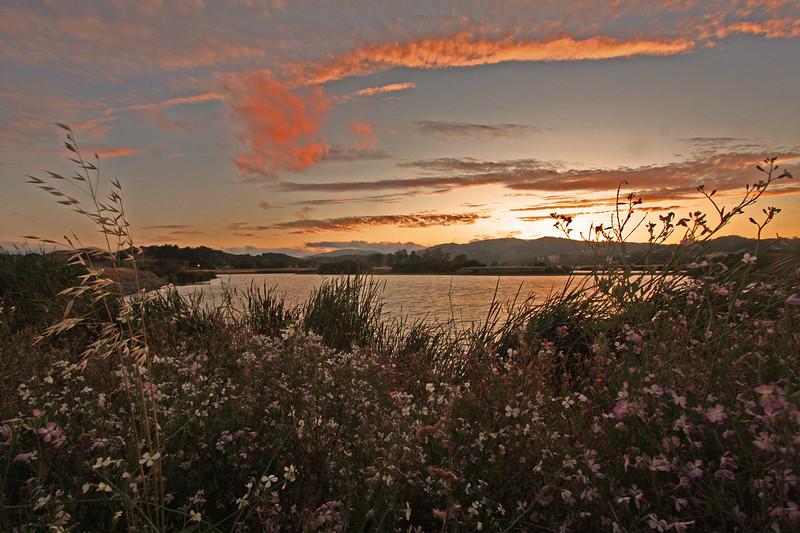 WB~Gallinassunsetscapewildflowerspinkcloudorigshped1280.jpg