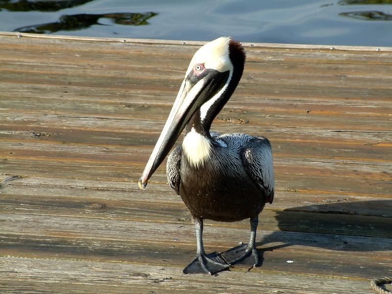Florida 2005 - 018.JPG