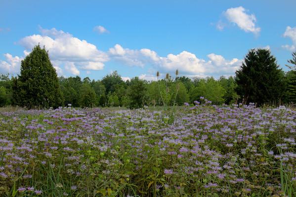 Blue Skies, White Clouds, & Wildflowers