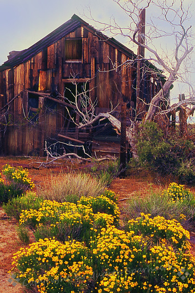 The Old House in the Desert ~ In the Mojave Desert Preserve, California