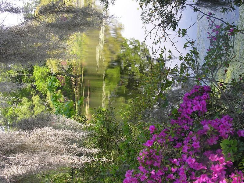Azalea_2_Wilmington_2007_012.jpg