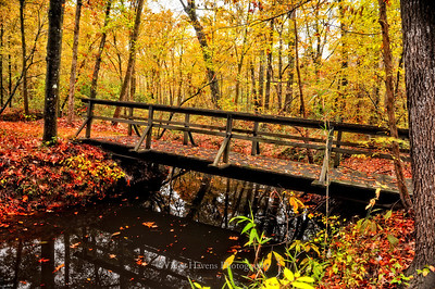 Natchez Trace Fall Colors