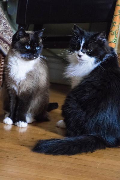 cats(LR) (1 of 1).jpg