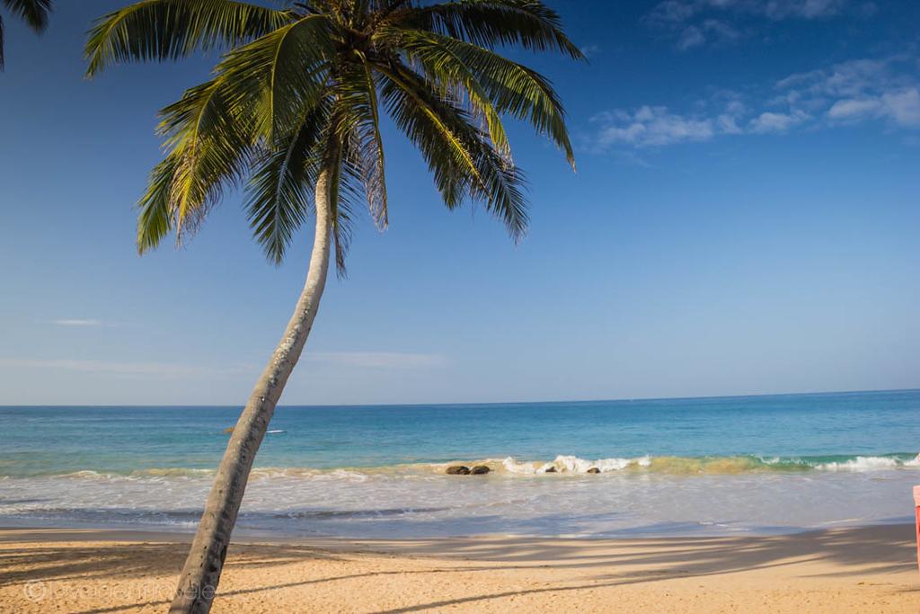 Guide to Mirissa, Sri Lanka