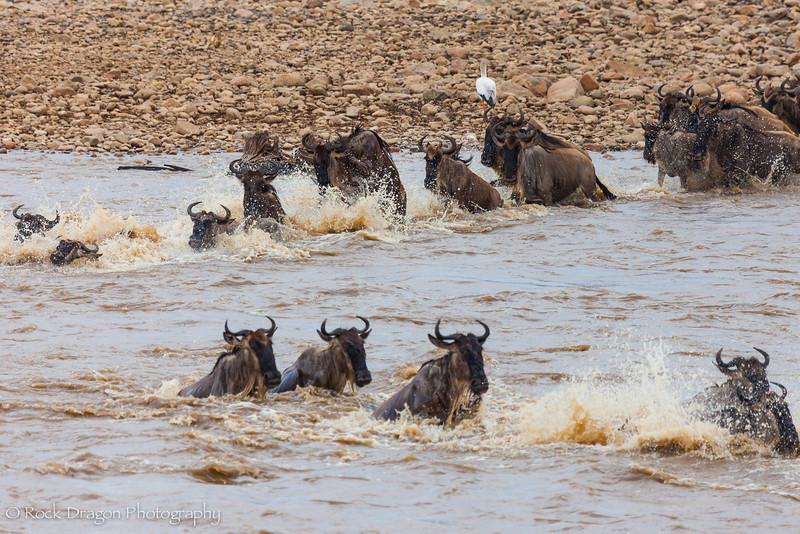 North_Serengeti-52.jpg