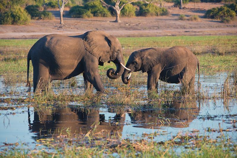 Africa-36.jpg