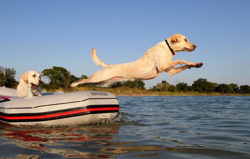 Boating Labrador Style.jpg
