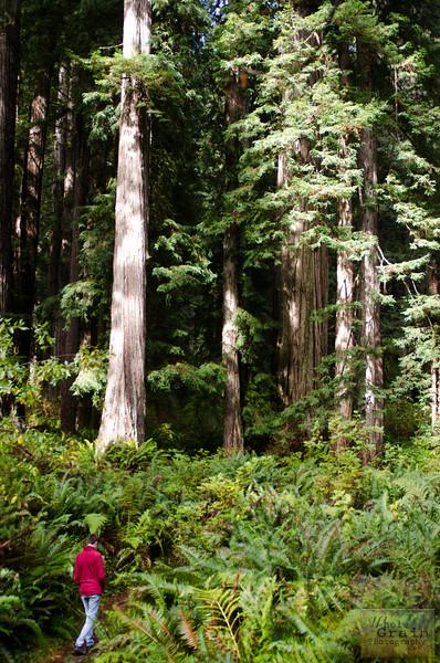 20141015_Redwoods_0012.jpg