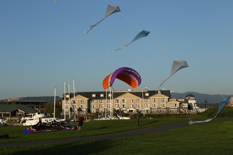 Belwether Kites LL .jpg