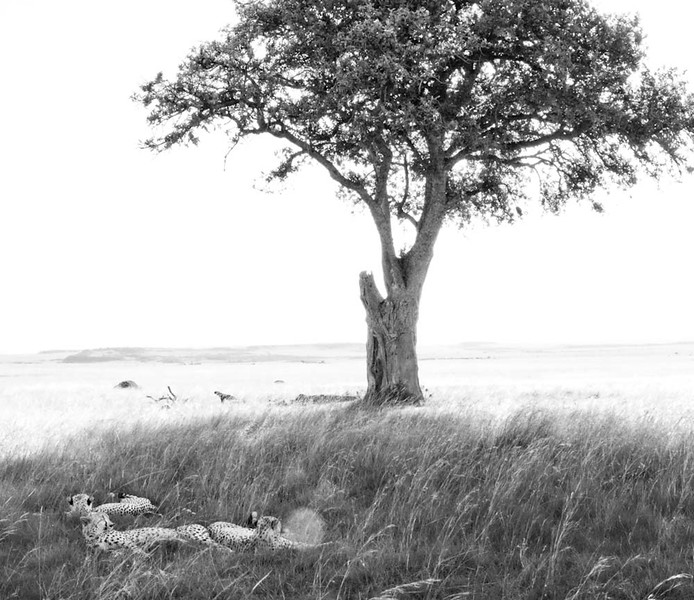 Three brothers resting in the shade, Maasai Mara National Reserve, Kenya