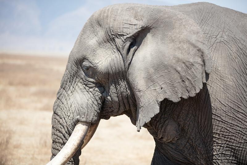 Africa - 101816 - 7775.jpg