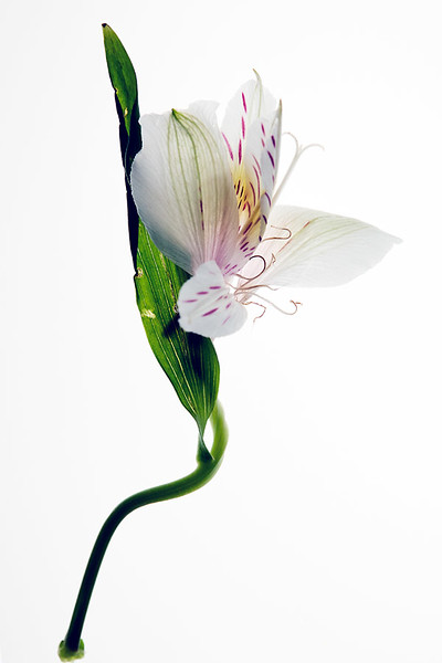 Flower_71I8552.jpg
