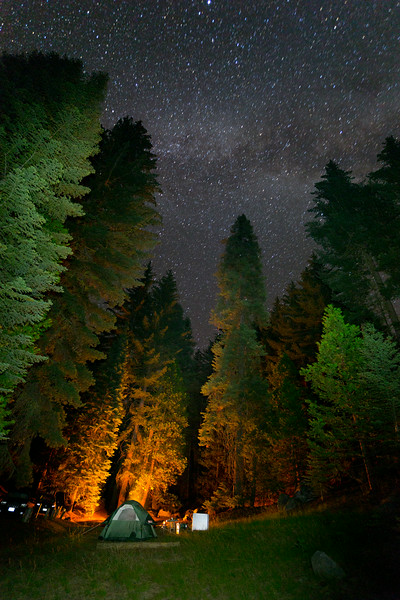 Sequoia_0820.jpg