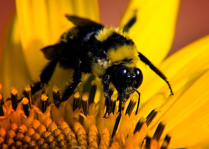 Z Bee .jpg