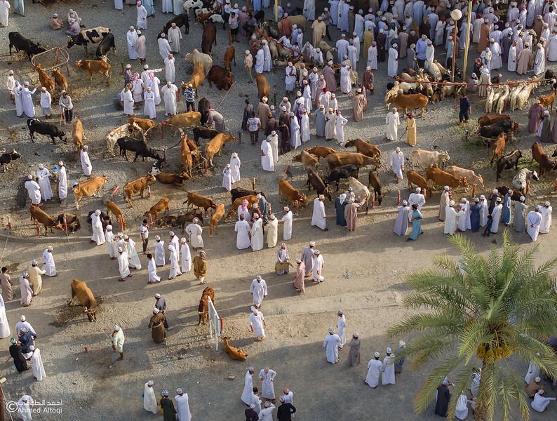 DJI_0072 copy- Oman.jpg