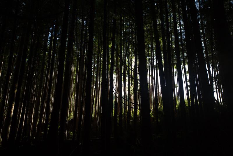150913_Nikki_Forest_5632.jpg