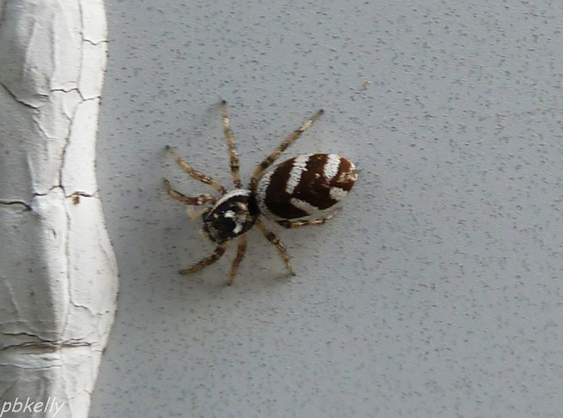 July 24.  If you were going to name this little spider, what would you name it?