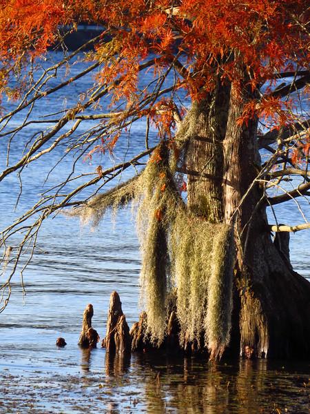 Lake Seminole COE, Eastbank Campground, Georgia (16).JPG