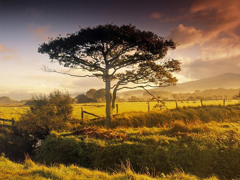 Nature37.jpg