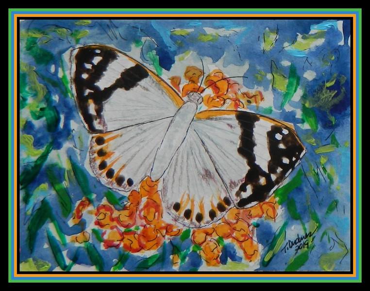 Albinus Metalmark, Ariconias albinus - Panama.4.5x6, watercolor, acrylic & ink, jan 16, 2019.DSCN9779A