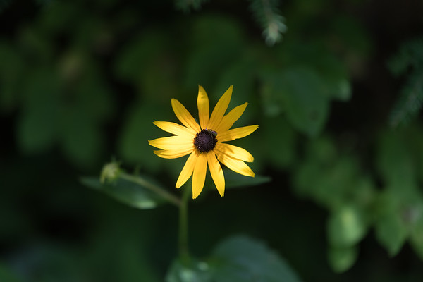 nature –Flowers