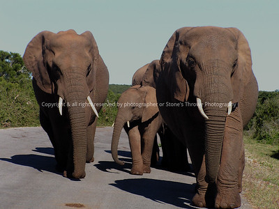 025-elephant-addo_eleph_np_so_africa-14jul06-1239