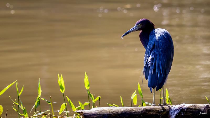 Oiseau _MG_2984.jpg
