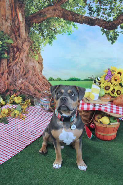 Summer Picnic at Central Bark Tosa