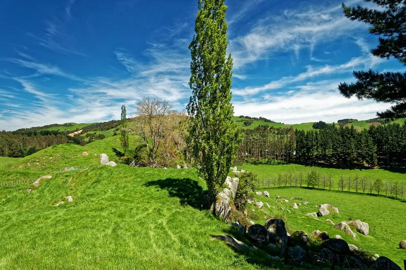 Countryside near Cambridge in the Waikato