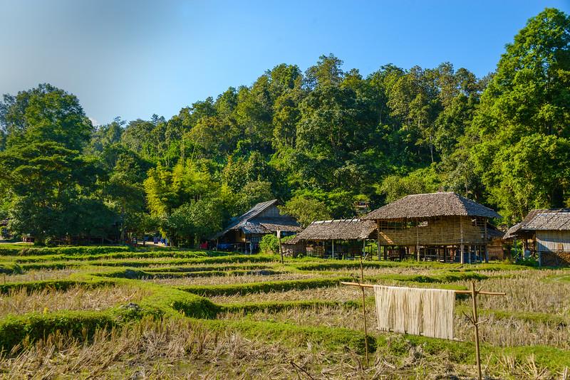 Thai Farm.jpg