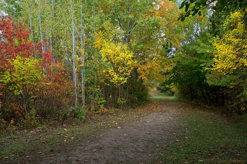 Color Trail